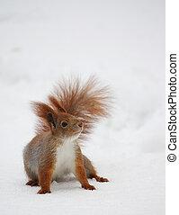 松鼠, 雪