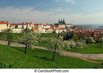 Prague-overall view of Prague Castle