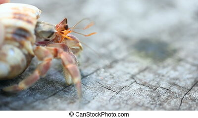 Hermit crab. - Hermit crab on the sandy beach.