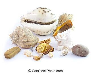 The isolated seashells