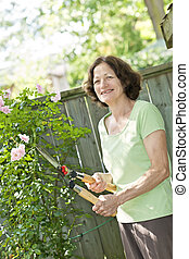 Senior woman pruning rose bush - Happy senior woman...