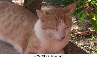 Brown and white cat.