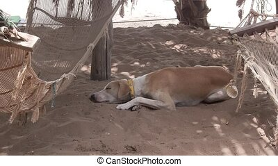 Dog resting next to a hammock.