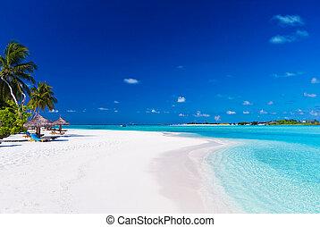 sobre, árvores, palma, lagoa, branca, praia, arenoso