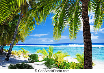 Palm trees overlooking amazing blue lagoon and beach