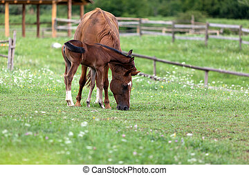 Foal and mare in a tenderness moment