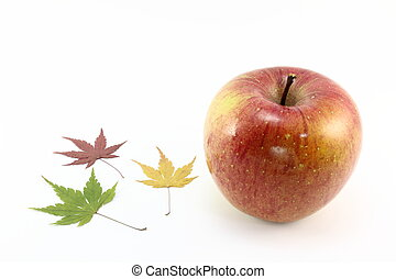 maple and apple