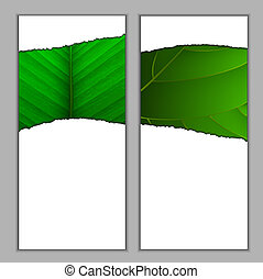 Vertical seasonal banners with green leaf Vector eps10