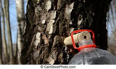 spring birch sap fresh drops