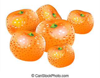 Vector mandarin - Vector drawing of orange citrus, mandarin...