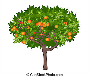 Mandarin tree - vector illustration of mandarin tree with...