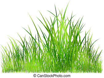 grass in sunlight - fresh spring grass in warm sunlight -...