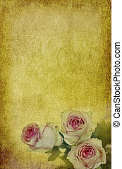 roses on old paper - grungy old parchment background with...