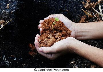 crescendo, árvore, mão