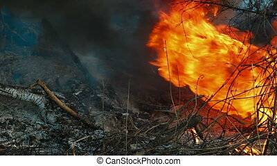 Wildfire - Forest fire