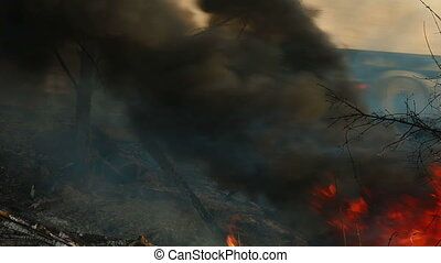 Forest Fire On The Roadside - wildfire on the side of the...