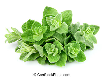 Oregano closeup on white background