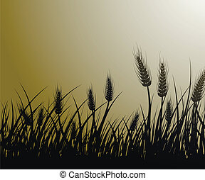 Field of wheat - Vector image of wheat field