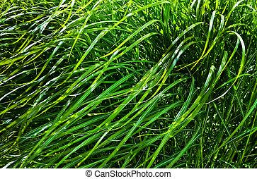 Windy Wild Grass