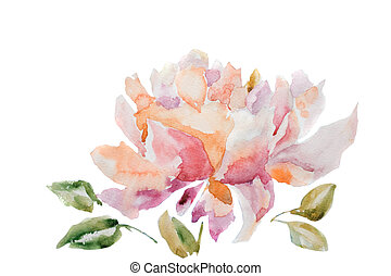 Watercolor illustration of peony flower