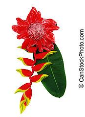 Red flower of etlingera elatior