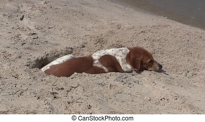 Dog on a sandy on a beach in The Gambia, West Africa