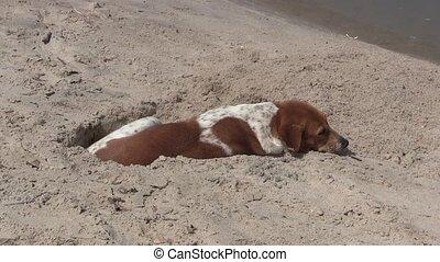 Dog on a  sandy on a beach
