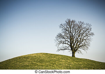 leafless tree - An image of a leafless tree on a hill