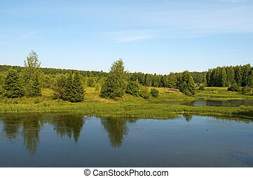 Small forest lake - Bank of the little forest lake, summer...