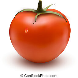 fresh tomato with drop