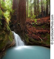 secoya, bosque, cascada