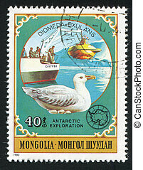 Albatross - MONGOLIA - CIRCA 1980: stamp printed by...