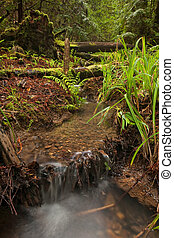Rain forest stream bed