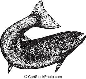 highly detailed sketch of a salmon with the tail curved