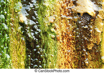 Algae growing on a wall by completely covering it - Algae...