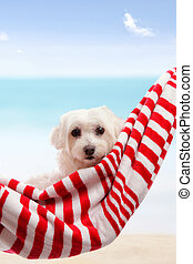 Cute puppy dog relaxing by the beach - Adorable white...