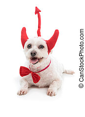 Devil Dog - A white dog lying down with red devil horns, bow...