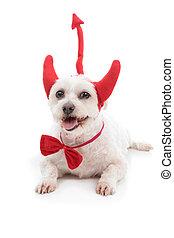 Diablo, perro