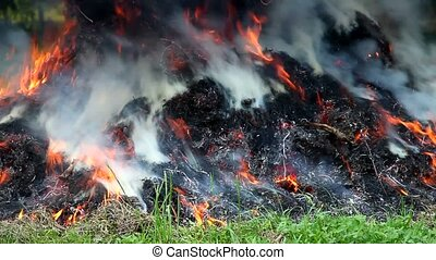 Grass Fire in the garden and pollution the air with Co2
