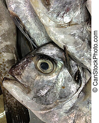 Closeup eye fresh sea fishes