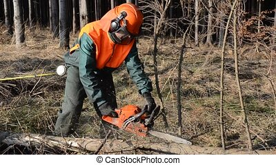 Woodcutter cutting wood video - Forest worker cutting wood...