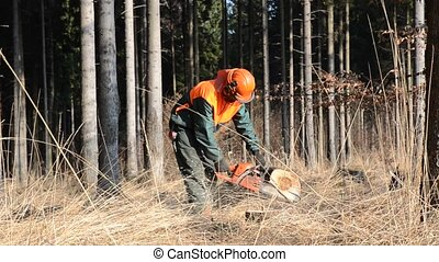 Lumberjack at work cutting spruce tree video