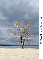 Lonely tree on the sand riverside - Lonely tree grows on the...