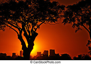 Buenos Aires at Sunset - A vibrant summer sunset with trees...