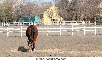 brown horse in corral