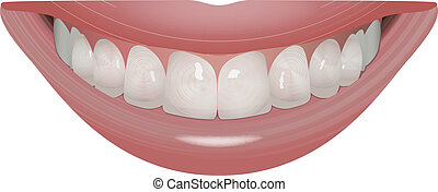 perfect smile - vector beautiful smile with perfect teeth,...