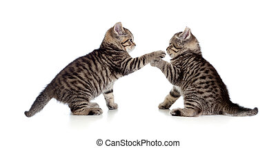 two little kittens playing together