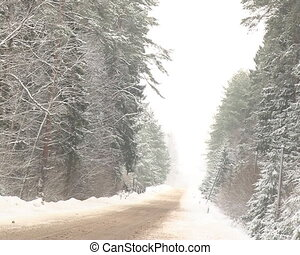 snowy conifer forest road - snowy forest road between...