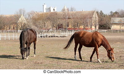 stable with horses