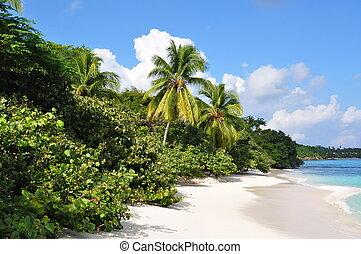 Hawsbill Beach St John SVI - Tranquill Caribbean Beach St...